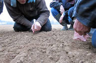 Bodenproben